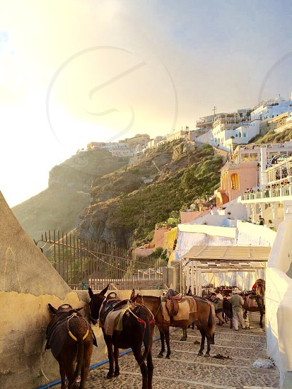 Santorini is truly a beautiful place. photo