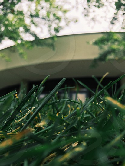 BYU campus building college fall summer late summer grass circle focus blades or grass green glass  photo
