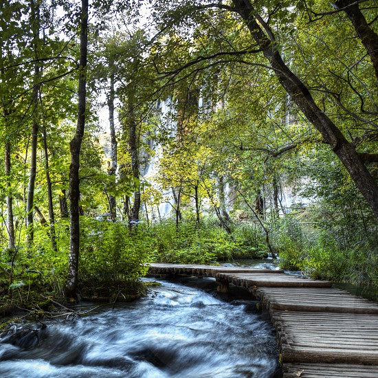 Forest woods park trees  river stream footbridge path Croatia  photo