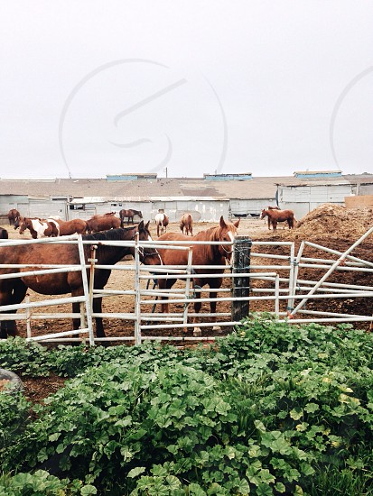 white metal horse fence photo