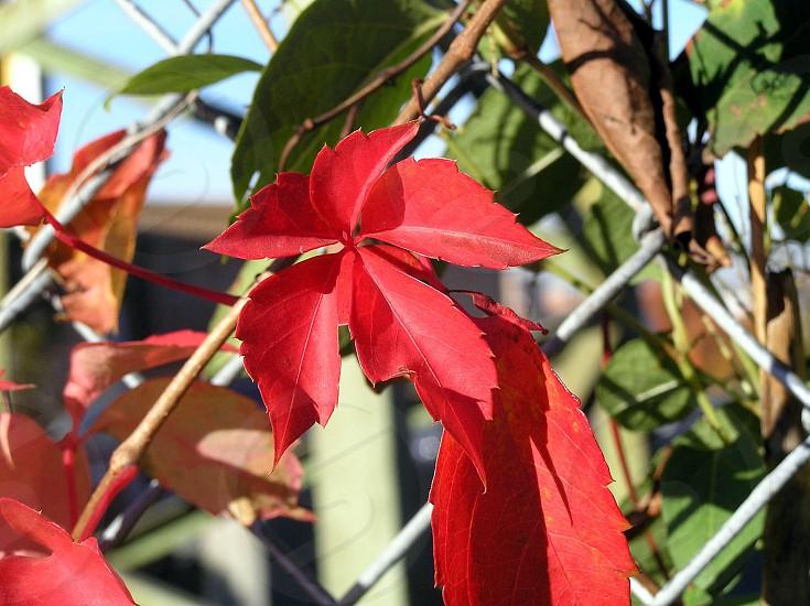 red petal flower photo