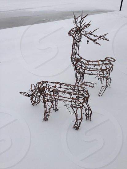 Ice winter reindeer Christmas decorations snow Storm lights photo