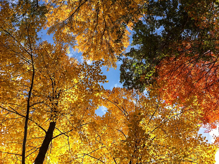 Fall trees glowing in the sun photo