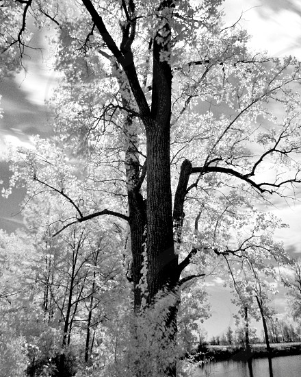 Infrared Photo Deshler OH Reservoir photo