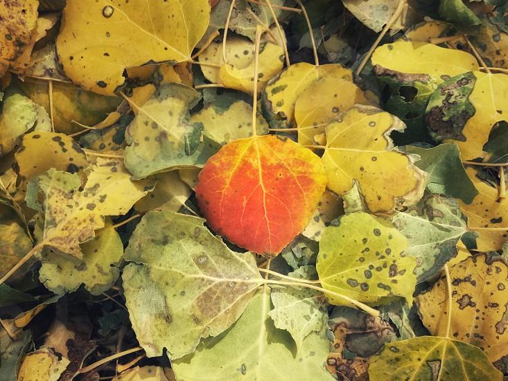 Autumn vibe fall colors photo