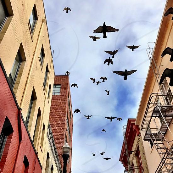 Birds in sky photo