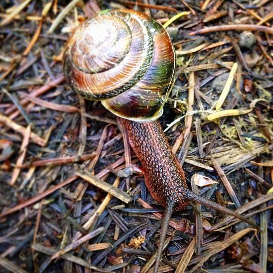 Snail forest ground shell crawl slime escargot moss green  photo