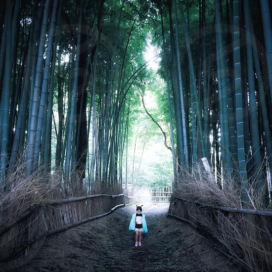 bamboo forest walkway photo