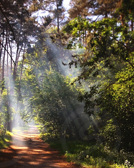 Sunlight in the forest nature summer  photo