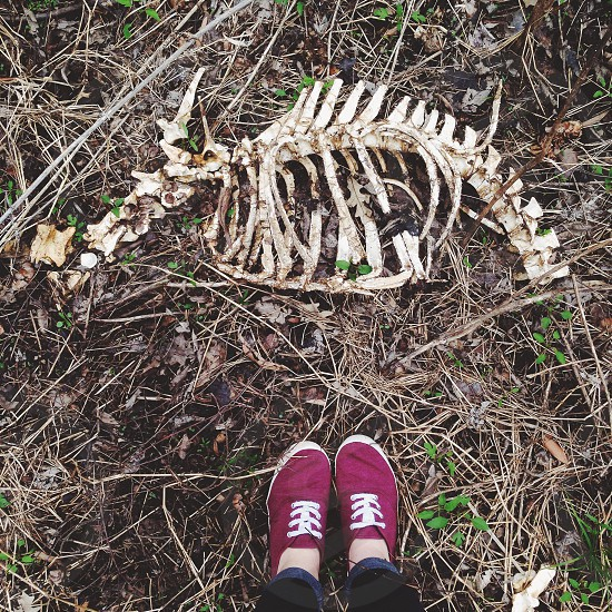white animal skull on ground photo