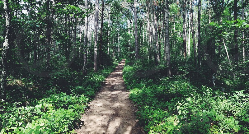 narrow pathway in the forest with green trees photo