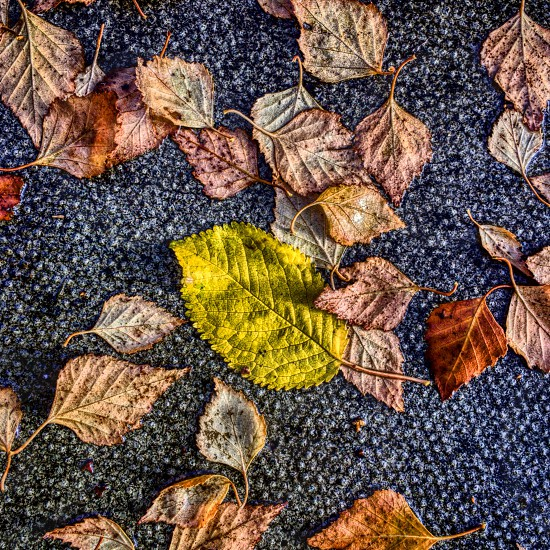 shallow focus photography of green and brown falling leaved photo