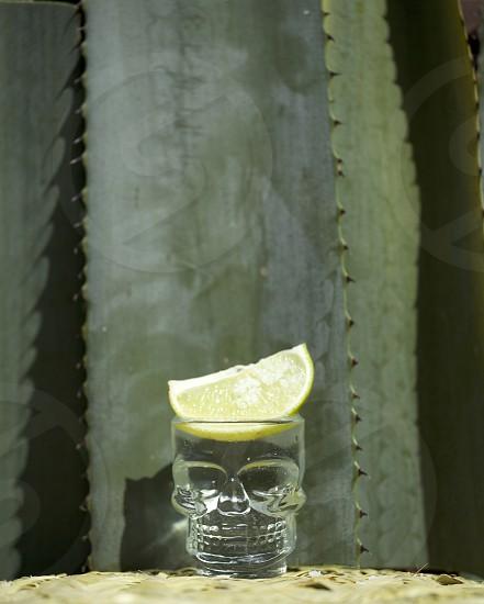 clear skull glass  photo