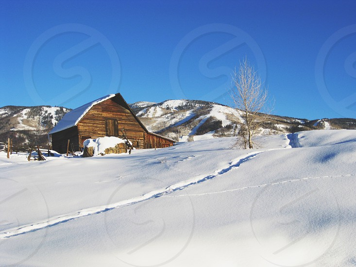 brown log cabin on snow covered land photo