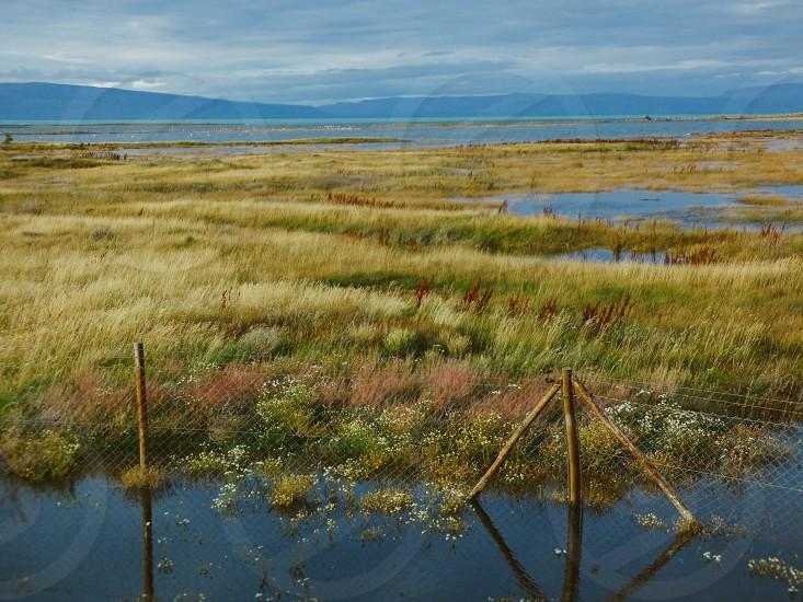 Marsh lands Nature grasslands  photo