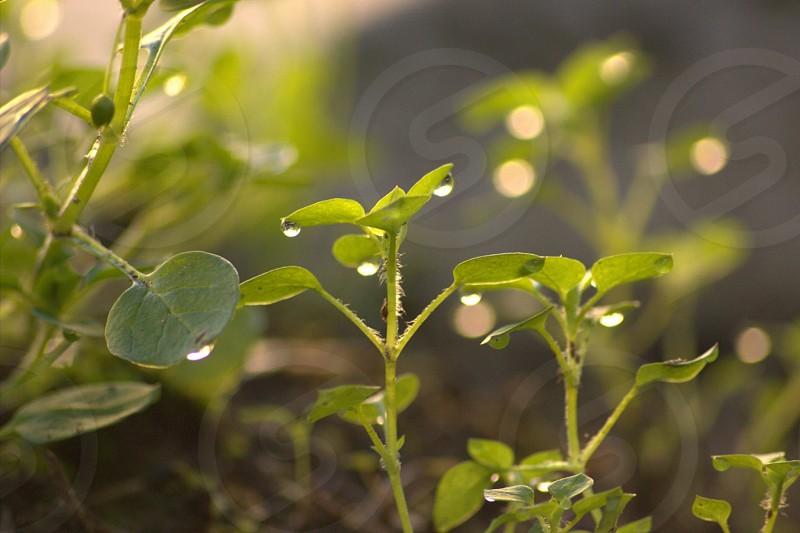 water droplets on green leaves in tilt shift lens photo