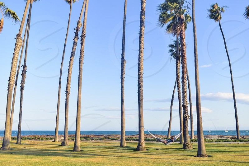 Hammock hanging between palm trees with ocean in background photo