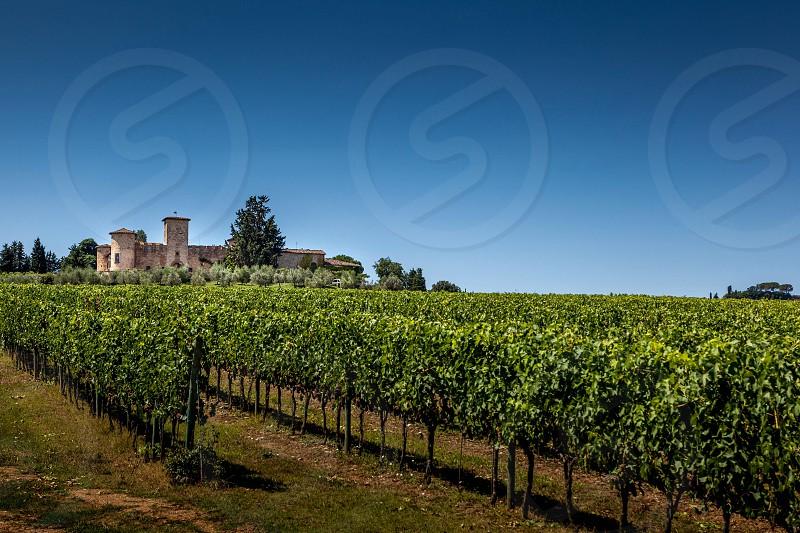 Tuscan vineyards.  photo