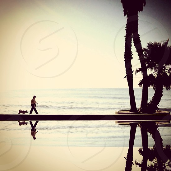 man and dog walking on the beach photo