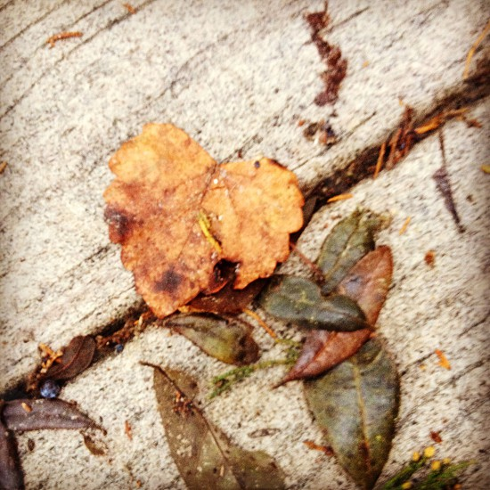 leaves love photo
