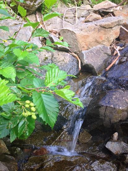 green leaf plant beside rocks photo