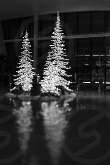 Christmas trees lights holidays holiday black and white tilt shift lens photo