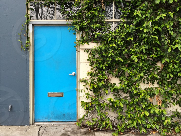 Blue door vine-covered wall photo