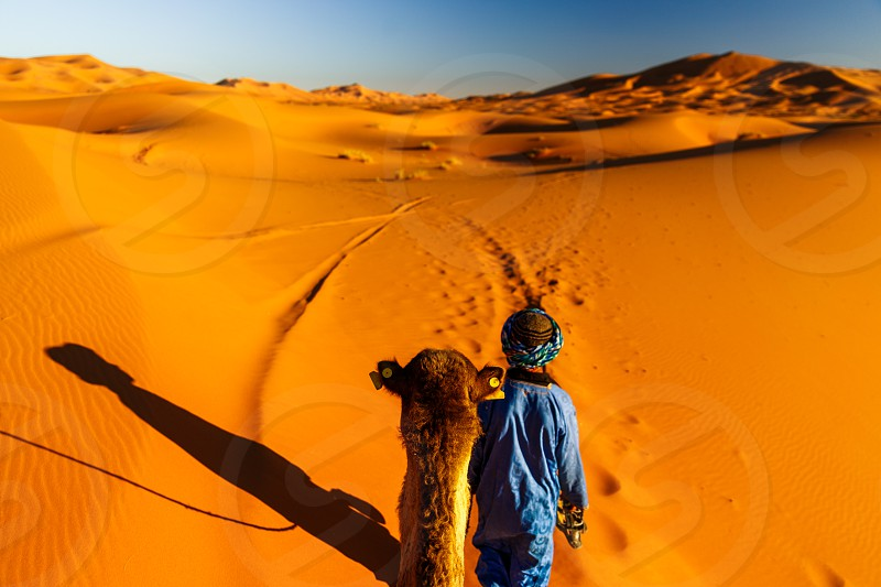sahara desert in morocco dunes camel and bedouin leading the way photo