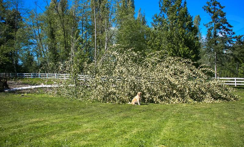 Yard clean up down tree photo