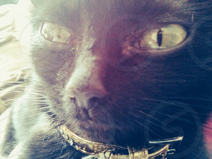 Bu-Tain the cat photo