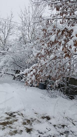 snow scene photo
