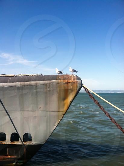 San Francisco Fisherman's Wharf Boat Birds photo