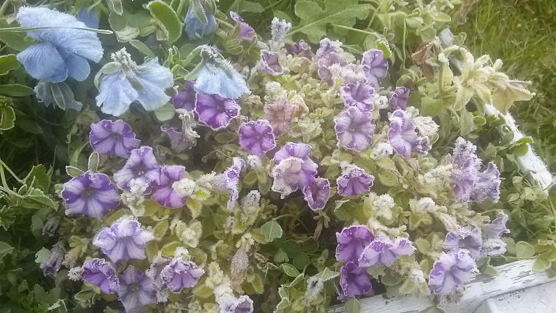 Frosty Flowers photo