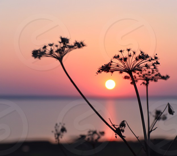 Sunset coral color photo
