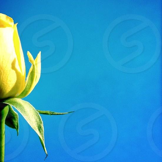 yellow flower macro shot photo
