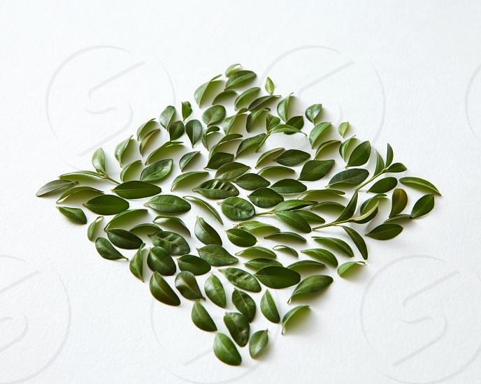 Green leaves square over white background. Closeup of many green leaves represented over white background. Nice composition for decorating or designing any poster. photo