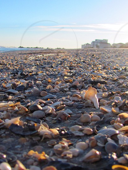 Sunset walk on Folly Beach South Carolina.  photo
