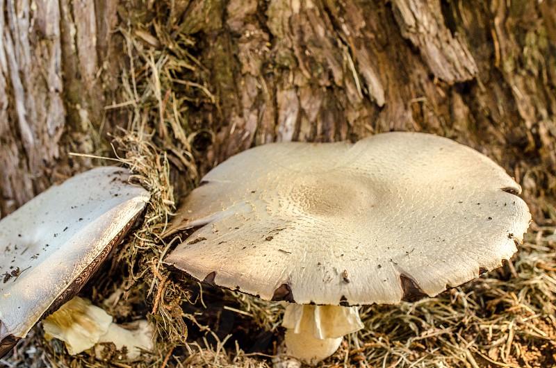 Mushroom Toadstool Tree Bark Moss Lichen photo
