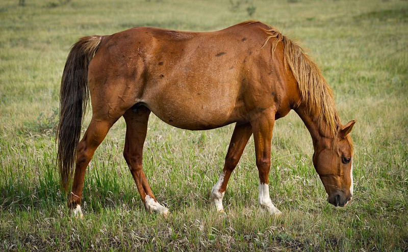 brown horse on green grass during daytime photo