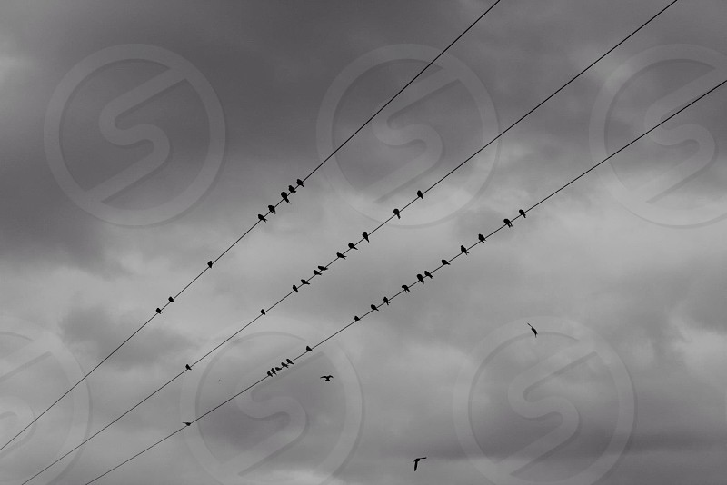 Birds on a phone line on a moody winters day photo