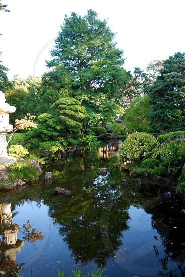 S. Francisco - Japanese Tea Garden photo