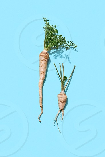 Healthy raw parsley root with green leaves on a blue background with copy space. Spicy ingredient for sauce. Flat lay photo