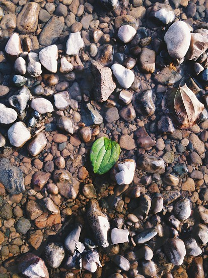 Stones and rocks and a green leaf in a river bed. photo