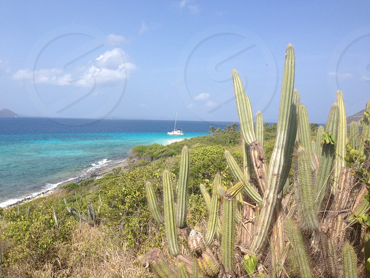 green cactus on beach during day photo