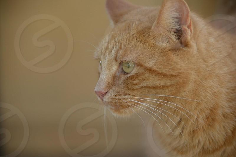 Curious cat photo