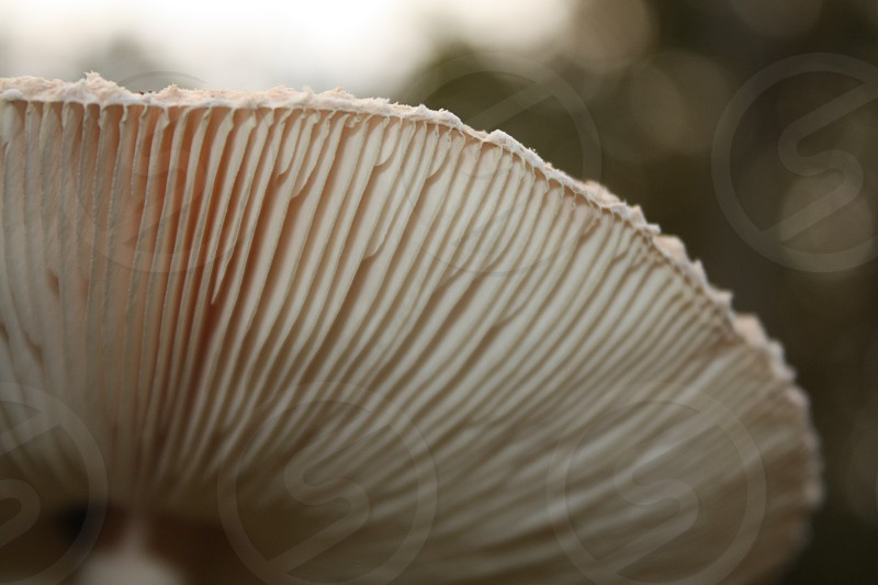 The layers of a mushroom photo