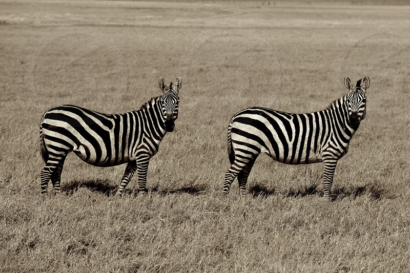 Double Vision - Tanzania photo