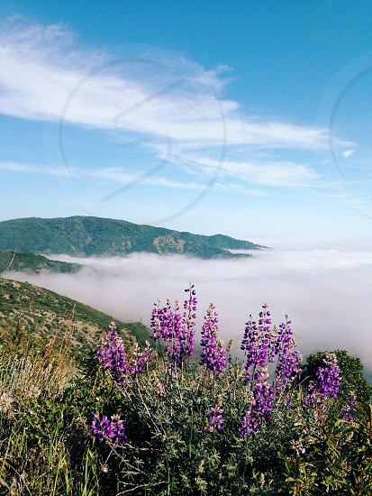 purple flowers and green weeds under blue sky and white clouds photo