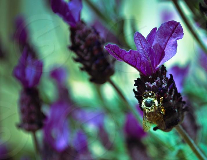 yellow bee on purple flower macro shot photo