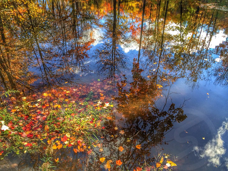 reflections in water of colorful leaf trees photo